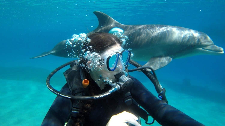 צלילה בריף הדולדפינים